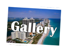 Florida Life Gallery